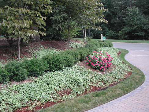 Sustainable residential landscapes landscape design nc for Residential landscaping ideas